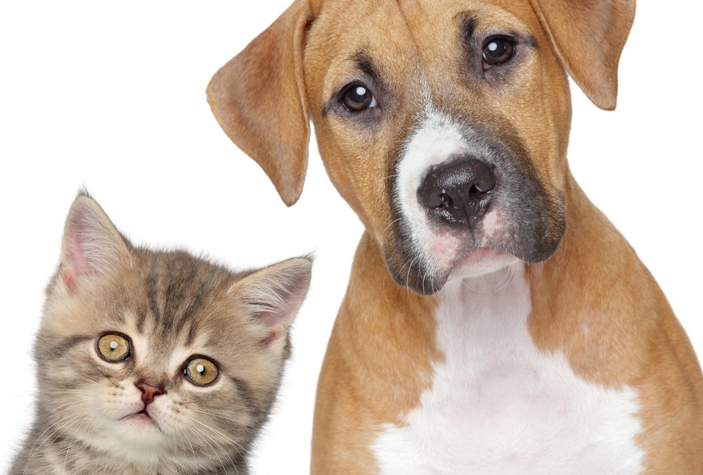 ¿CABE LA POSIBILIDAD DE CITAR A UN ANIMAL DOMESTICO COMO TESTIGO EN UN JUICIO?